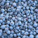 Berries cut heart attack risk in women