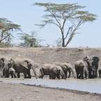 New safaris for experiencing Africa