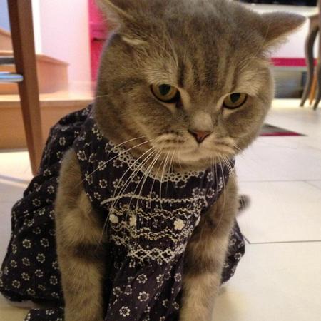 Victoria Beckham's cat