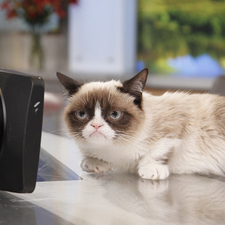 Grumpy Cat hates having its photo taken