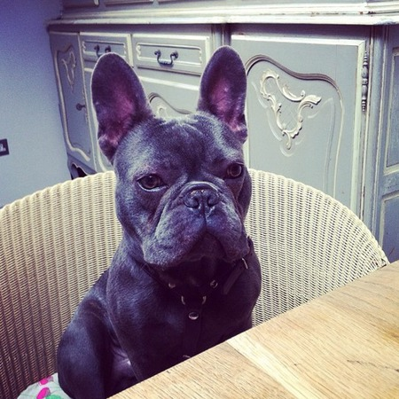 Millie Mackintosh's dog Herby