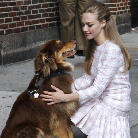 Amanda Seyfried's dog