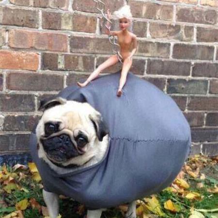 wrecking ball pug - miley cyrus parody - spoof - handbag.com