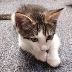 Want a kitten delivered to your office for the day?