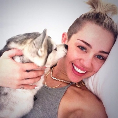 Miley Cyrus' dog - celebrity pets - cute animals - animal pictures - celebrity pics - news - handbag.com