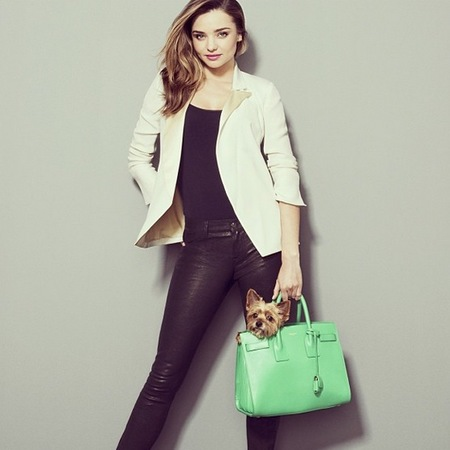 Miranda Kerr - puppy in saint laurent handbag - instagram - shopstyle - handbag.com