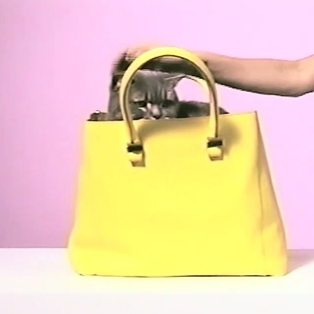cute cat in yellow handbag - victoria beckham handbag - cats - designer bags - handbag.com