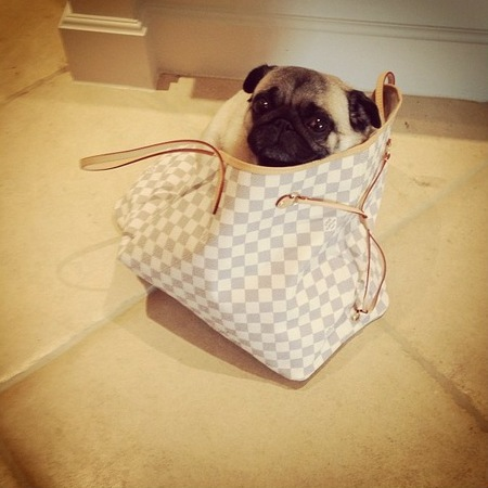 Frankie Sandford's puppy in Louis Vuitton bag