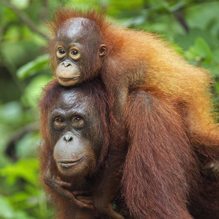 borneo - orangutans - travel feature - travel bag - handbag.com