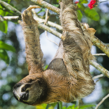costa rica - sloths - travel animal feature - travel bag - handbag.com