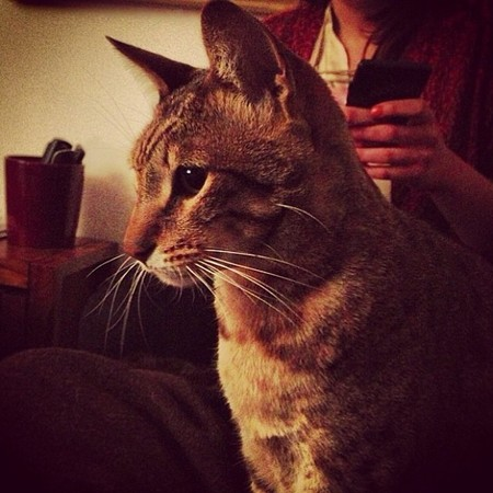 Rita Ora's cat Bruno