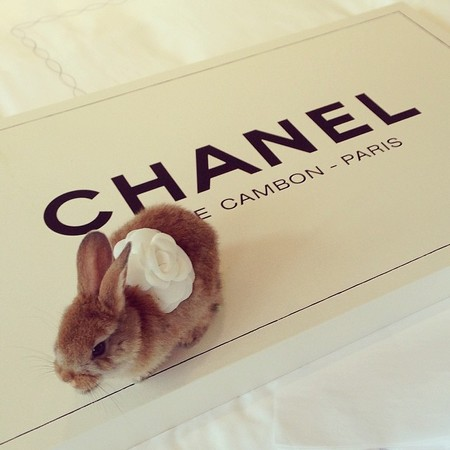 cara delevingne bunny on chanel box - is cecil delevingne cooler than choupette - day bag - handbag
