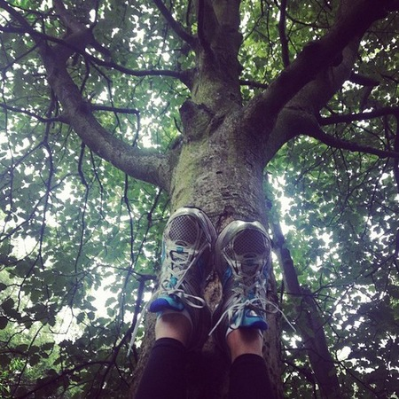 Generic workout shot - trainers on tree - running - fitness - gym - handbag.com