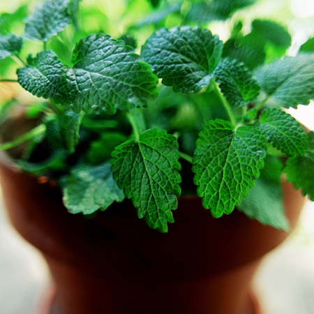lemon balm - anti depressant properties - gym bag - handbag.com
